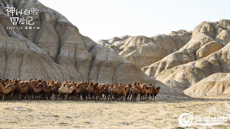 行进在峡谷中的驼群.jpg